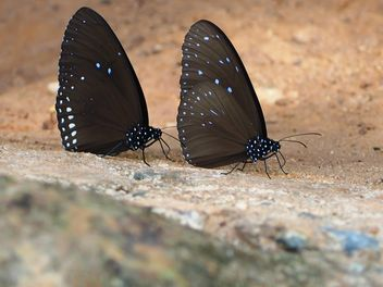 Two butterfly on ground - image #225433 gratis