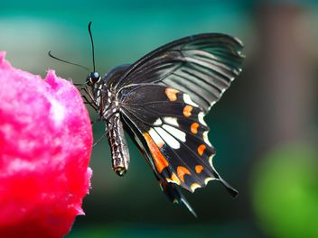 Butterfly close-up - Free image #225443