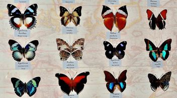 Collection of butterflies - Kostenloses image #229453