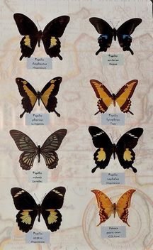Collection of butterflies - image gratuit #229463