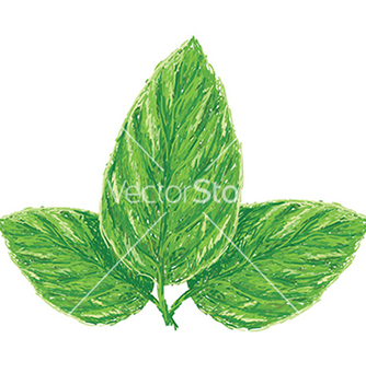 Free unique style of fresh basil leaves ocimum vector - Kostenloses vector #233713