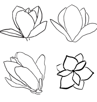 Free set of magnolia flowers vector - Free vector #235633