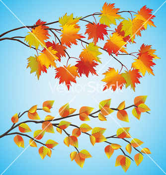 Free set of autumn tree vector - Free vector #240453