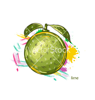Free lime with colorful splashes vector - vector gratuit #243173