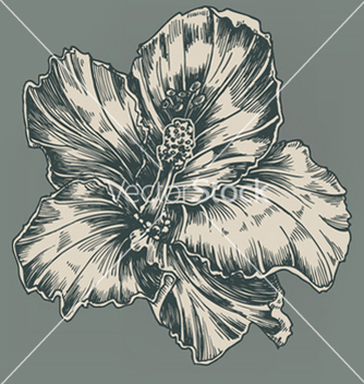Free vintage hibiscus vector - Free vector #262783