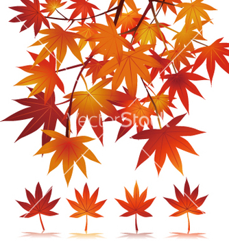 Free maple vector - Free vector #267893