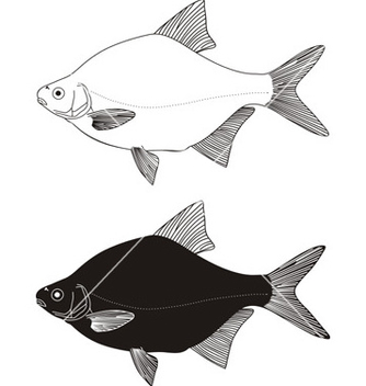 Free freshwater fish bream vector - Free vector #267913