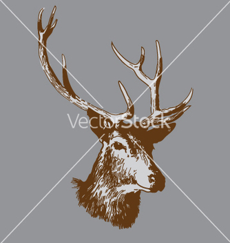 Free deer head vector - Free vector #269853