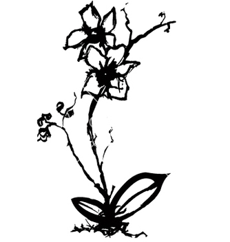 Free orchid vector - Free vector #270883