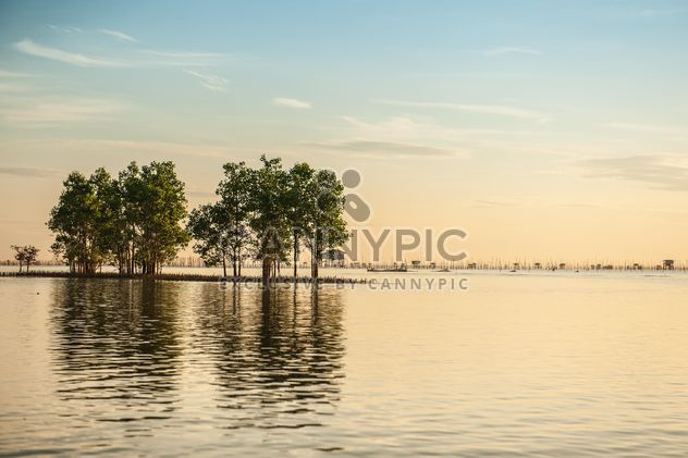 Trees growing from water - image #271833 gratis