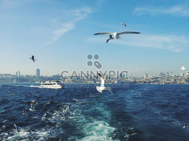 seagulls flying and boat at sea - Free image #272313