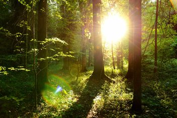 golden sunset in the forest - image gratuit #272513