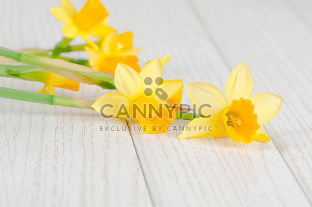 Daffodils on white wooden background - Free image #272573