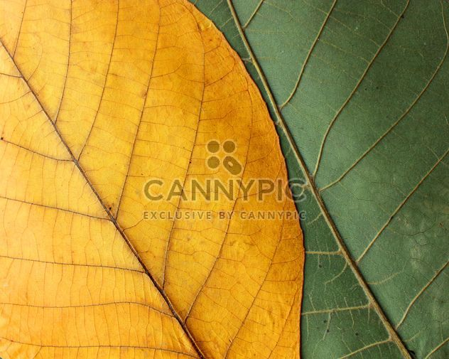 Green and yellow leaves - Free image #272613