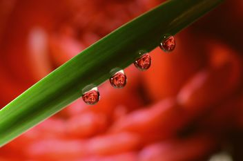 Four water drops on leaf - бесплатный image #272943