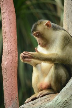 monkey in the zoo - image gratuit #273043
