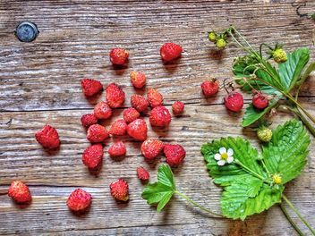 Strawberries from the forest - image #273933 gratis