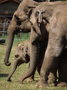 Elephants in the Zoo - Free image #274933