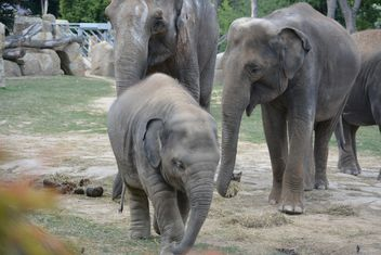 Elephants - Free image #274963