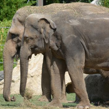 Elephants in the Zoo - image gratuit #274973