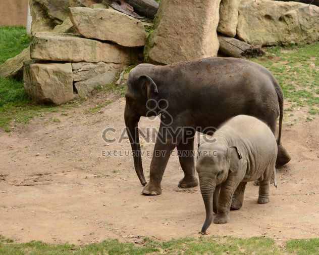 Elephants in the Zoo - Free image #274993