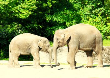 Elephants: large and small - Free image #275003
