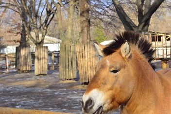 Wild horse in th Zoo - image #275033 gratis