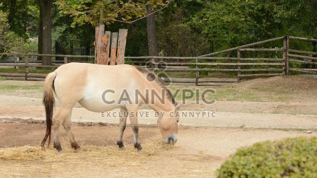 Brown horse - Free image #275063
