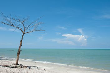 Tree on beach - image gratuit #275093