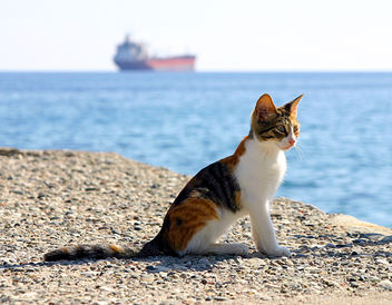 Kitten by the sea - image #275533 gratis