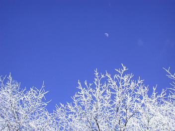 Winter Trees with Moon - Free image #276563
