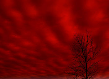 Blood Red Sky - Free image #276643