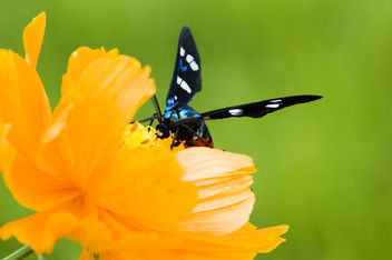 Sweet Surrender - image #277023 gratis