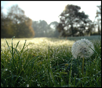 Morning Dew - image gratuit #277563