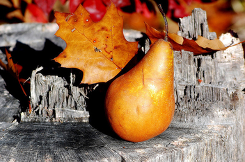 Pear-ish Fall-ish Composition - Free image #277643