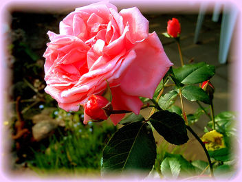 lovely_rose - image gratuit #277793