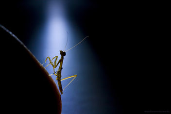 happy birthday, baby mantis (hello, cruel world) - Free image #278093