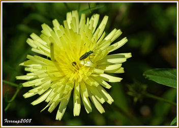 verde y amarillo - green and yellow - Free image #278473