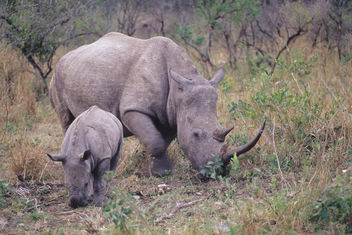 South Africa. mazzaliarmadi.it wildlife - Kostenloses image #278493