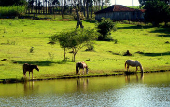 Horses in the Field of Peace - image #279683 gratis