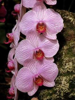 Beauty orchids - Free image #279693