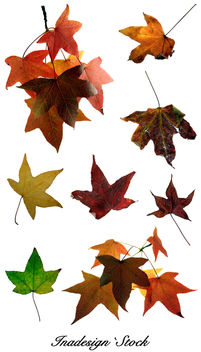 Autumn Leaves 2 - image gratuit #279803