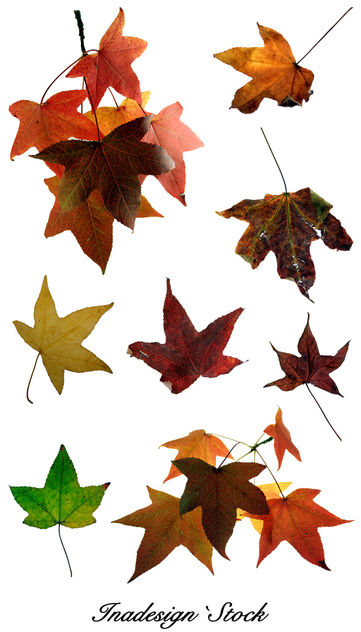 Autumn Leaves 2 - Free image #279803