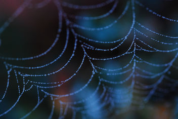 spiderwebs at dawn - image gratuit #279913
