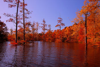 Ouachita River Fall Backwater - Free image #280563