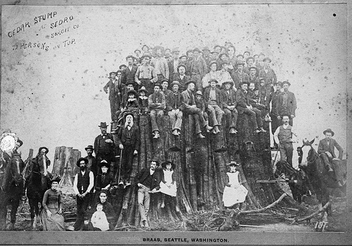 Cedar stump at Sedro, circa 1890 - Free image #280593