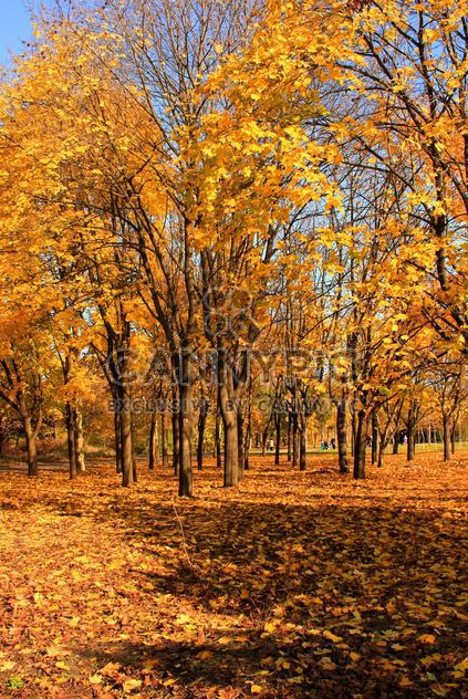 Autumn yellow leaves - Free image #280943