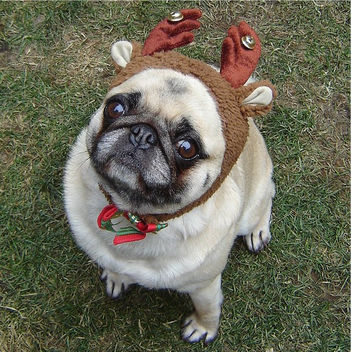 Pug Compact Reindeer Christmas Costume - Kostenloses image #281603