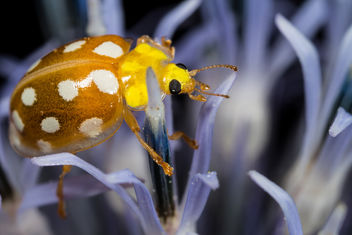 Orange Ladybird - image #283113 gratis