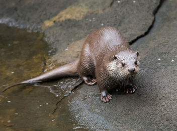 otter2 - Kostenloses image #283293